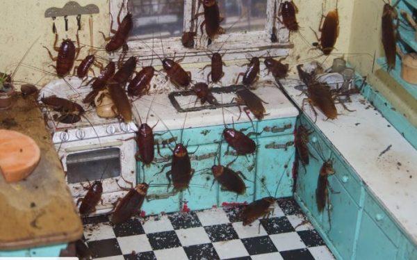 best cockroach repellent