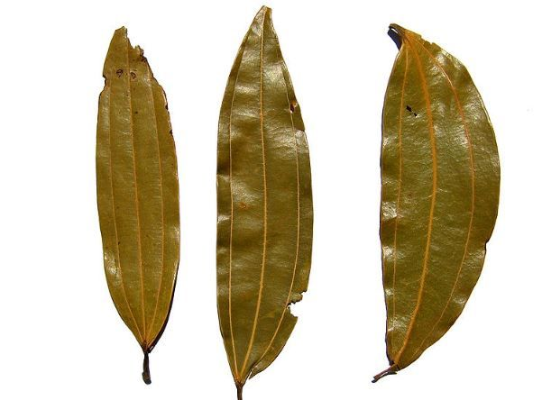 how to get rid of cockroaches in kitchen cabinets with indian bay leaves